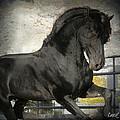 Stallion Power by Royal Grove Fine Art