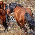 Stallions Gone Crazy by James Anderson