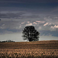 Stand Alone by Kristie  Bonnewell