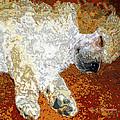 Standard Poodle Puppy Dozing Off by A Gurmankin