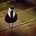 Standing Bird by Maria Angelica Maira