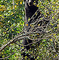Standing Black Bear by Cindy Murphy - NightVisions