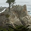 Standing Tall On The Rock by Robert Mollett