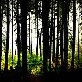 Stanley Park Triptych Right by Patricia Keith