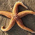 Star by David Nicholls