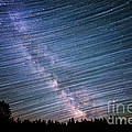 Star Dust by Michael Ver Sprill