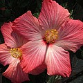 Star Flower by Barbara Griffin