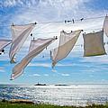 Star Island Clothesline by Donna Doherty