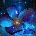Star Light Plumeria by Linda Sannuti