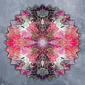 Star Mandala B by Filippo B