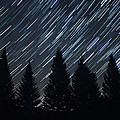 Star Trails And Pine Trees by Penny Meyers