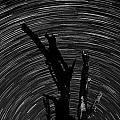 Star Trails by Larah McElroy