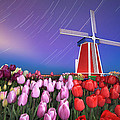 Star Trails Windmill And Tulips by William Freebillyphotography