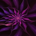 Starburst Pinwheel Pink Violet by Doug Morgan