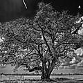 Stardom Bw by Steve Harrington
