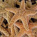 Starfish by Amy Cicconi