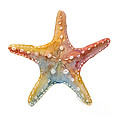 Starfish by Amy Kirkpatrick