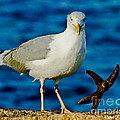 Starfish And Seagull Dance On The Rocks by Carol F Austin