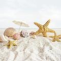 Starfish And Seashells  At The Beach by Sandra Cunningham