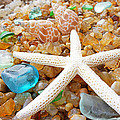 Starfish Art Prints Shells Agates Coastal Beach by Baslee Troutman