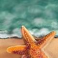 Starfish  by Christine Fournier