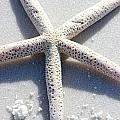 Starfish by Gayle Miller