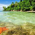 Starfish In Clear Water by Jess Kraft