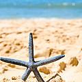 Starfish On Algarve Beach Portugal by Amanda Elwell