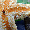 Starfish On Beach Glass by Kimberly Perry
