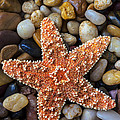 Starfish On Rocks by Garry Gay