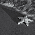 Starfish On The Beach Bw by Susan Candelario