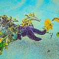 Starfish Paradise by Roxy Hurtubise