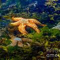 Starfish by Robert Bales