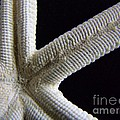 Starfish Underworld by Mary Deal