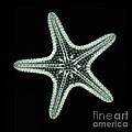 Starfish X-ray by Scott Camazine