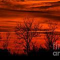 Stark Sunset by Dave Bosse