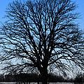 Stark Tree by Julie Kiefer