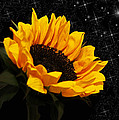 Starlight Sunflower by Judy Vincent