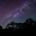 Stars At The Hundred Acre Wood by David Morefield