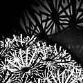 Stars Shadow by Lori-Anne Fay