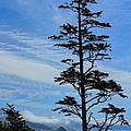Stately Pine by Dale Kauzlaric