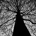 Static Tree by Greg Kear