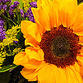 Statice And Sunflower by JG Thompson