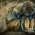 Stay Together by Angela Doelling AD DESIGN Photo and PhotoArt