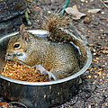 Stealing Food by Aimee L Maher ALM GALLERY