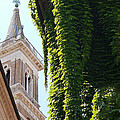 Steeple And Ivy by Herb Paynter