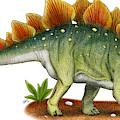 Stegosaurus by Roger Hall