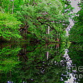 Steinhatchee River by Barbara Bowen