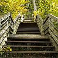 Step Trail In Woods 10 by John Brueske