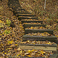 Step Trail In Woods 11 by John Brueske